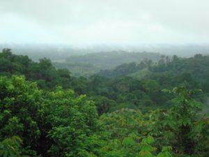 Forêt Parc naturel régional de la Guyane