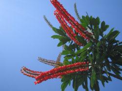 Norantea - Territoire du Parc